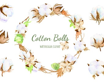 Watercolor Clip Art Cotton Boll Illustration printable instant download