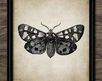 Moth Print - Moth Illustration - Moth Art - Moth Picture - Digital Art - Printable Art - Single Print #64 - INSTANT DOWNLOAD