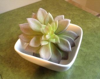 Single succulent, Small Succulents, Faux Plant, Tiny Plant, Fake Plants, Succulents, Faux Plan, Small Plant, Succulent in White Square Vase