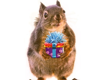 Squirrel Gifts, Squirrel Print, Squirrel Art, Funny Birthday Gift, Birthday Print, Squirrel Photograph, Funny Squirrel Print