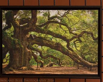 Walnut framed Angel Oak Canvas