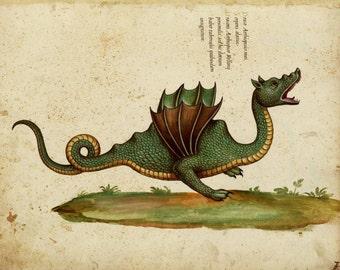 Draco aethiopticus or the Ethiopian Dragon - mediaeval picture of a dragon