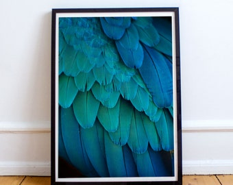 Blue and Green Bird Feathers Photography Print, Exotic Wildlife Art for Home Decor, Macaw Parrot Wall Art
