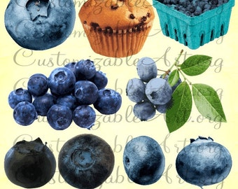 Blueberry Clipart Digital Blueberries Clip Art Printable Realistic Berries Berry Leaves Leaf Single Blueberry Muffin Box Images Graphics