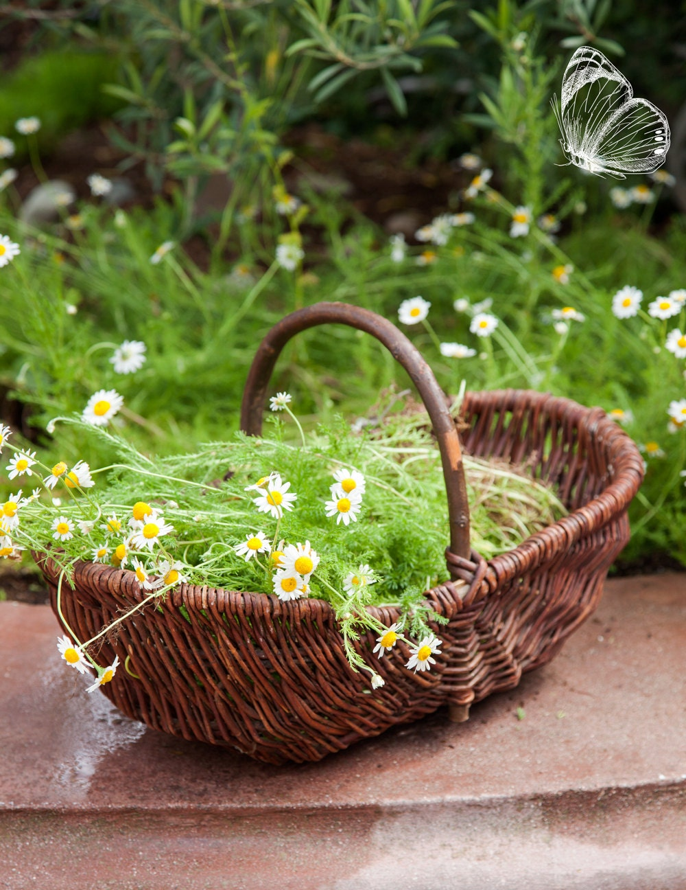 Lovely french willow gathering basket medium size panier - Diametre panier basket ...