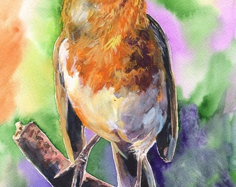 European robin  watercolor Print of the Original painting Cute  Art   home decor british robin  songbird wildliife Robin
