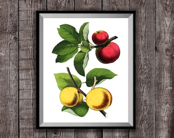 Apples & Apricots Poster Kitchen Wall Art print, Fruit Illustration Print, Kitchen fruit drawing Poster, cooking gift, kitchen gifts art
