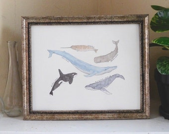 Watercolor Whale Painting | Hand painted whales print