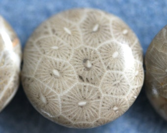 Fossil Coral  Flat Rounds 20 x 20 x 6mm - Ten Beads