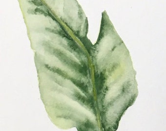 Watercolor Botanical (bannana leaf) #2