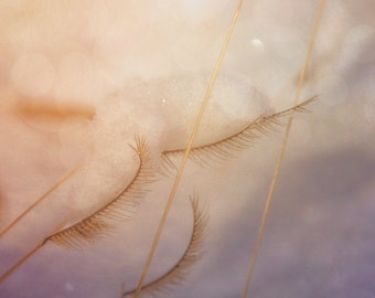 Snow Scene, Eyelashes, Nature Photography, Dried Grass, Lavender, Pink, Nursery Photo, Nature's Wonders