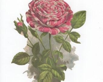 Paper Rose Cut-out.  Circa 1880.