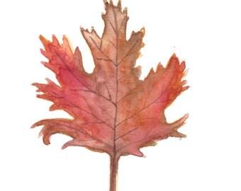 Acer Saccharum (Sugar Maple) Leaf Original Watercolor