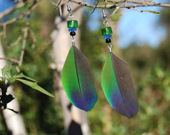Multicolored Feather Earrings