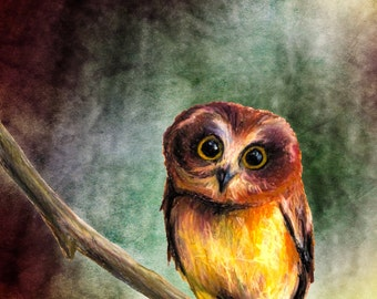"Giclee Print ""Little Owl"""