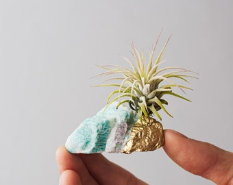Unique Birthday Gift, Air Planter, Girlfriend Gift, Best Friend Birthday, Boho Decor, Desk Accessories, Amazonite Air Plant Crystal, Mint