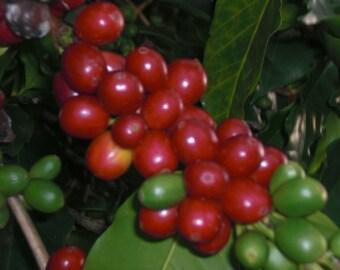 Kona Coffee, Honaunau, Hawaii
