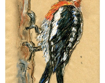 5x7 print woodpecker - bird art mixed media drawing