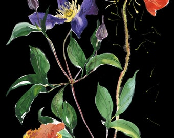 Botanical on Black #3 Giclee print by Gretchen Kelly