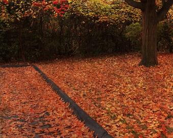 Autumn Tree Photo, Fall Color Photo, Fall Maple Tree, Rustic Fall Photo, Fallen Leaves Art, Autumn Trees Art, Autumn Wall Art, Cottage Art