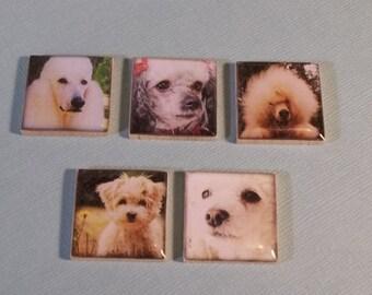 Poodle Dog Magnet Set