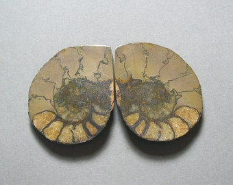 fossil pyritized AMMONITE cabochons matching pair two 40X49mm designer cabs