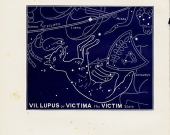 1895 Antique STARS CHART print, Lupus or victima the victim, Constellations. original vintage astronomy lithograph + 100 years old