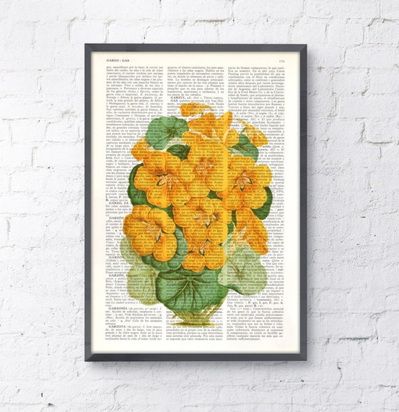 Summer Sale Nasturtiums flowers Vintage illustration- Nasturtiums Yellow Flowers Vintage Book page art BFL147