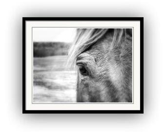 Black and White Horse Portrait, Closeup Western Equestrian Equine Fine Art Photography Print