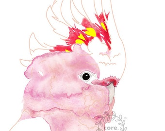 Cockatoo Australian Fauna Major Mitchell cockatoo watercolour illustration