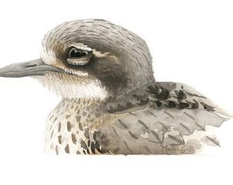 Bush-stone Curlew Original Watercolour Avian Faces Series 12/12