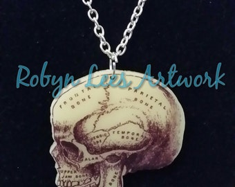 SALE Anatomical Medical Printed Acrylic Skull with Names of Bones/Areas