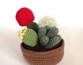 Crochet Cactus Plant Garden