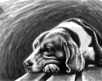 Beagle Bench - Hand Signed Print 28x47cm