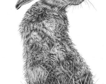"Irish Hare ""Bad Hare Day"" Pencil Drawing Fine Art Portrait Signed Print"