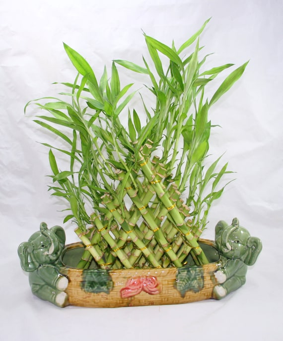 how to make a 2 layer bamboo plant