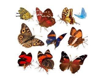 Clipart Bug, Clipart Bugs, Png Butterfly, Png Butterflies, Clipart Butterflies, Clip Art Butterflies