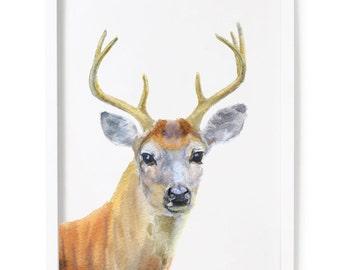 Deer Print of Watercolor Painting, Animal Giclee Print