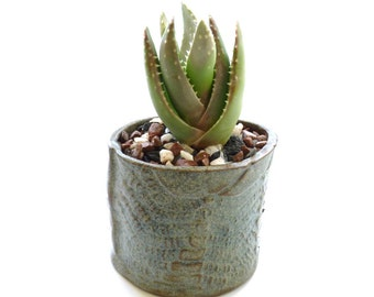 Cactus pot ~ succulent planter, small plant container, flower pots, wabi sabi decor, handmade stoneware cacti planters, gift for gardeners