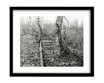 tree photography, train tracks, abandoned place, railroad art, black and white photography, black and white art, railroad photography