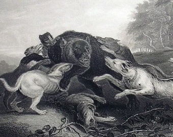 1830 - The BEAR Hunt - Original Antique Steel Engraving. Print. Dogs. Canine. Bear. Hunt. Hunting.