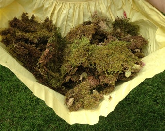 Preserved Moss for Crafting and Decor