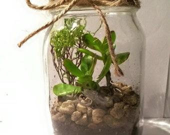 Glass Jar Succulent Terrarium