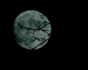 Moon fine  art photography, full moon, strawberry moon, crescent moon photo, eclipse photography, Moon through trees photography