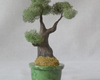 MB16 Miniature Bonsai tree in a simulated jade planter