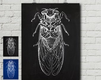 Cicada Print - Entomology Engraving, Insect, Enlightenment, Science, Vintage, Blueprint, Wall Decor, Wall art, Cool Gift!