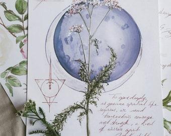 "Digital print of my Yarrow Botanical Illustration, botanical print, botanical illustration, floral illustration - 8.5"" x 11"""