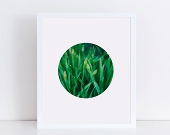 Green Plant Photography, Nature Photos, Geometric Circle, Green Decor, Minimalist Poster, Printable Wall Art