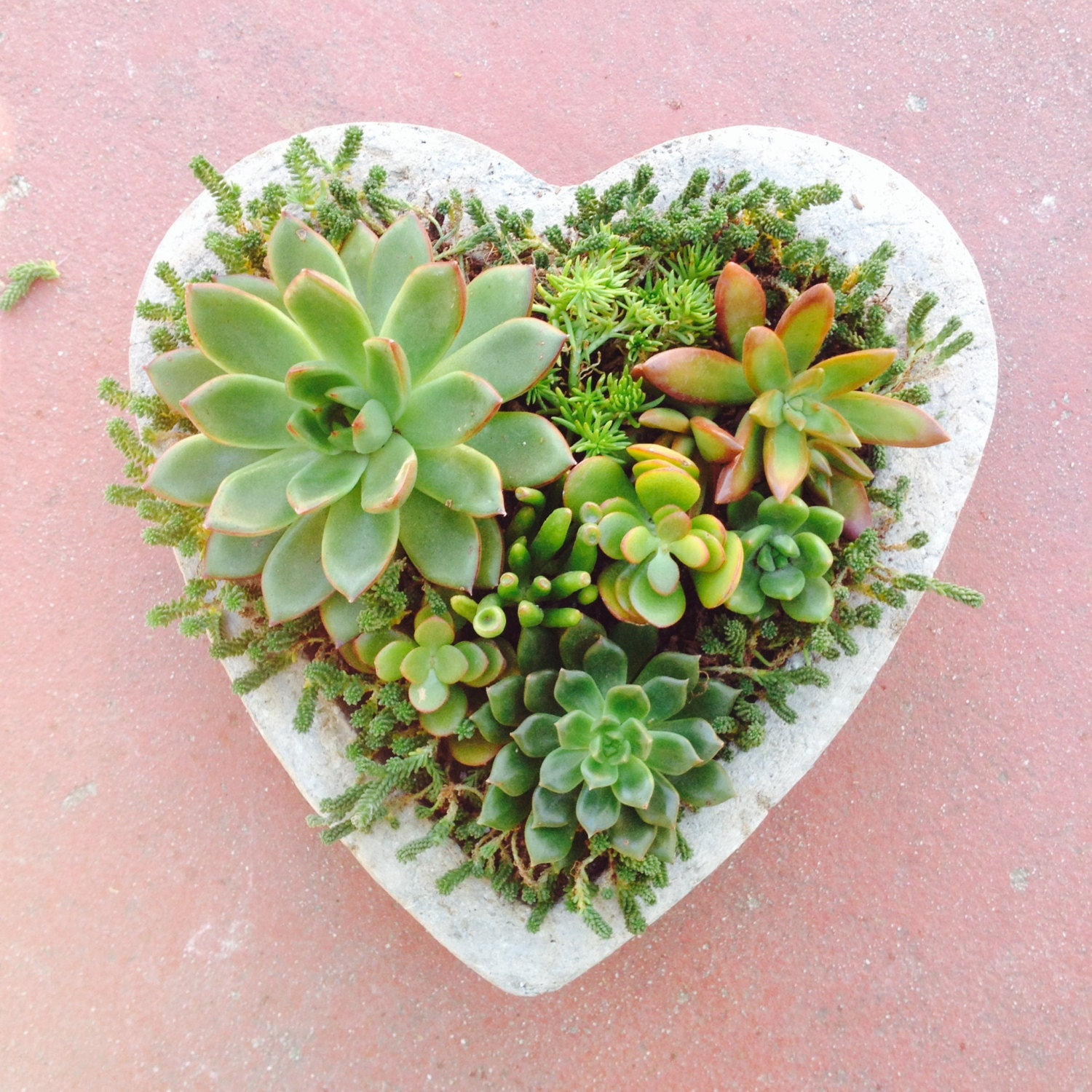Succulent Heart Planter Large Birthday Get Well