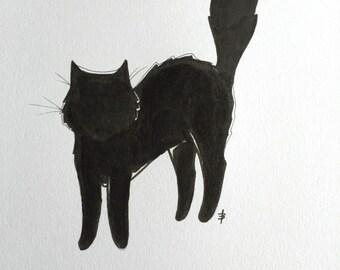 The curious cat